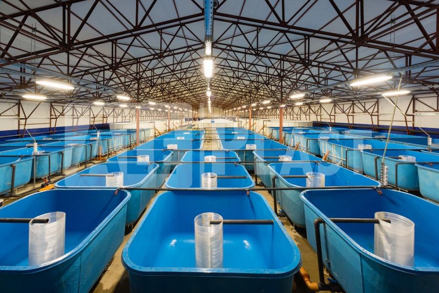 Оборудование для разведения рыбы на продажу в аквариумах.